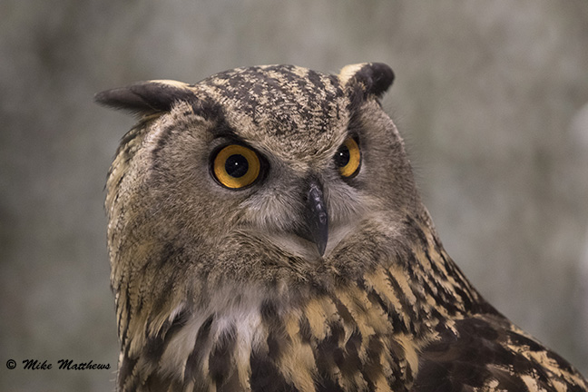 Eagle Owl email copy